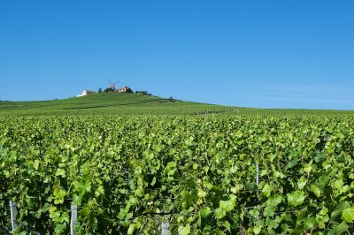 Wine & Food Tour in France